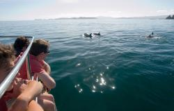 images/Touren/StrayBayBack/StrayNZ-Bay-of-Islands-Dolphins-800.jpg