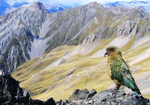 Exklusive 20 Tage Rundreise: Natur hautnah erleben